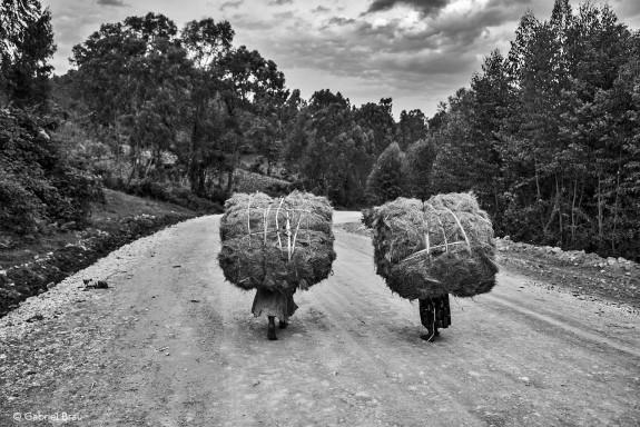 Mujeres de la etnia Benchi camino del mercado cerca de Mizan Teferi. (Etiopía)