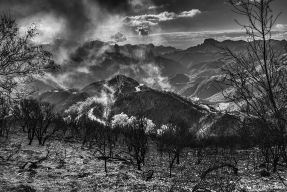 Isla de Gran Canaria. Paisaje quemado con brumas en la zona de la cumbre. Cruz de Tejeda.